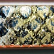 PU-Leather-Snake-Skin-Print-Belt-Band-For-Diy-Making-Wristband-Waistband-amp-More-370909528575-e2a3